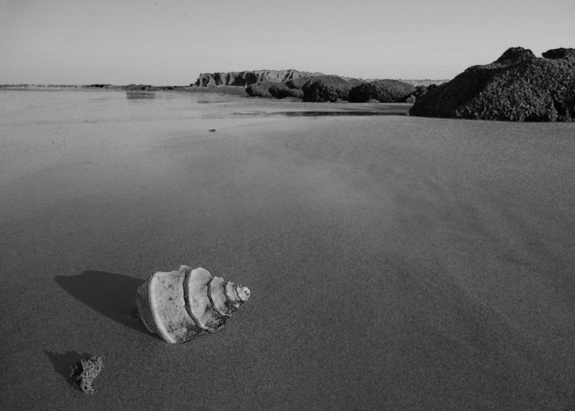 Fotograf Siering — Muschel am Strand