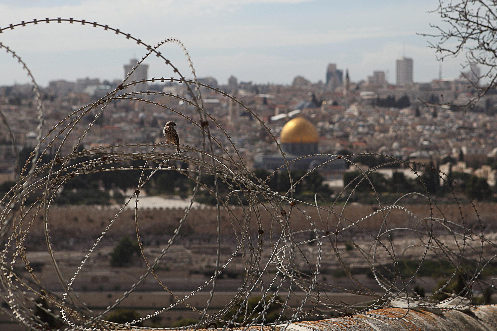 Fotografie-Philosophie — Spatz in Jerusalem